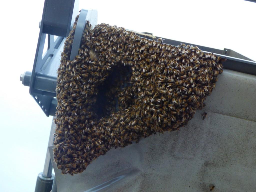 Indispensables abeilles !